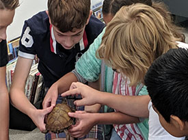 Students touching a turtle.